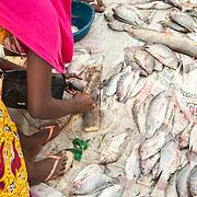 LÉGENDE: Rosine courbée tient à sa main gauche un poisson frêt qu'elle s'apprête à découper à l'aide d'une hache. Ces clients préfèrent que le poisson soit coupé en plusieurs morceau. LIEU: Marché de Chagoua, N'Djaména, Tchad. PERSONNE(S): Rosine Remadsi (à Gauche) coubrée, tient à sa main gauche un poisson et l'autre une hache.