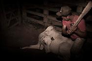 Junco do Maranhao, Brazil, June 26 of 2013:  Bolsa Familia em Junco do Maranhao. Homem tenta matar vaca em curral  no matadouro municipal de Junco do Maranhao. (photo: Caio Guatelli)