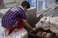 Sacred Cows - In ancient India the slaughter of milk-producing cows was prohibited.  Even when meat-eating was permitted, the ancient Vedic scriptures encouraged vegetarianism.  The cow has continued to be revered and protected in India.