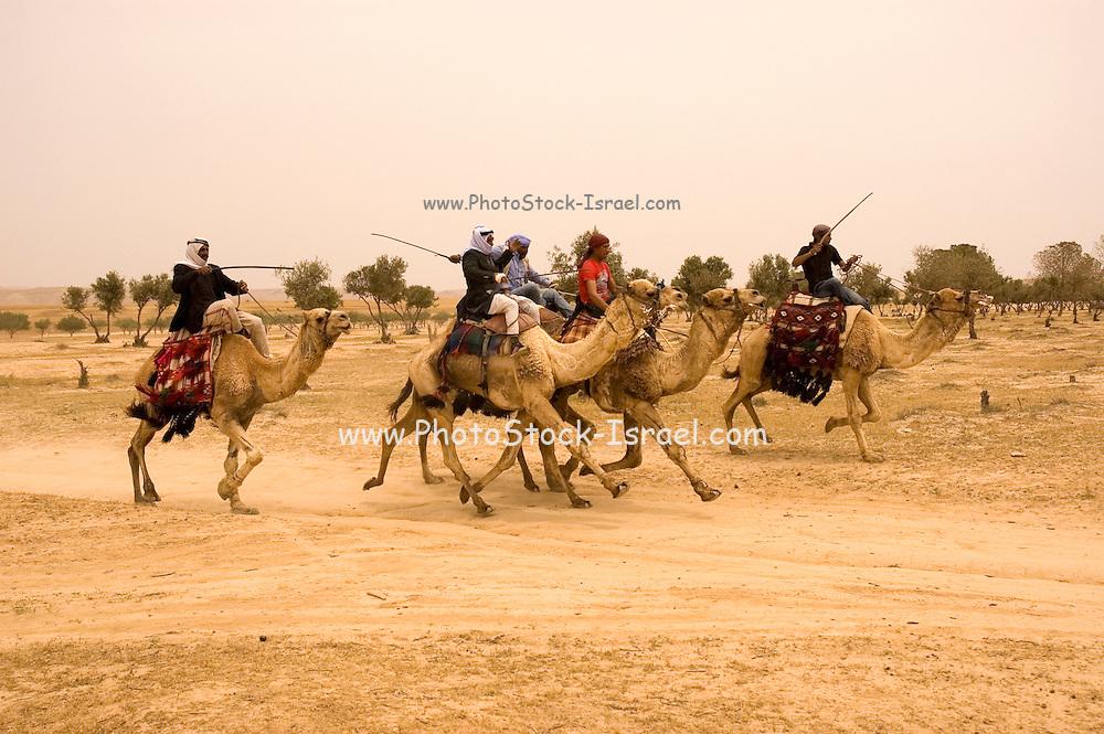 Israel, Negev, Beduin Camel racing in the desert