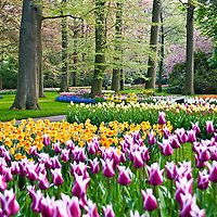 Netherlands Travel Stock Photography