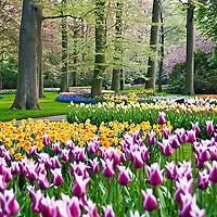 Keukenhof Tulip Gardens 2011 Lisse The Netherlands Stock Photos