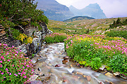 Monkey Flowers and Alpine Stream, glacier national park