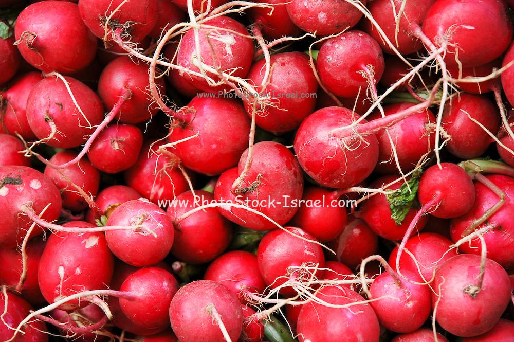 Israel, Haifa, Wadi Nisnas, red Radish (Raphanus sativus) and green lettuce leaves