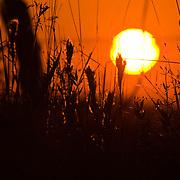 Sunset over the Katy Prairie, silhouetting brushy bluestem grass, in autumn, West Harris County, near Houston, Texas,  tall grass prairie.