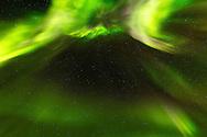 Coronal aurora above Teklanika River in Denali National Park in Interior Alaska. Evening. Autumn.