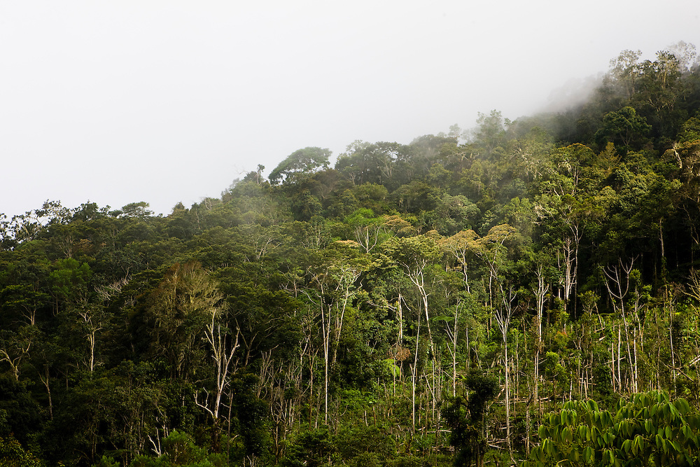 View of the rainforest near the village of Mokwam, Papua, Indonesia, Sept. 11, 2008..Daniel Beltra/Greenpeace