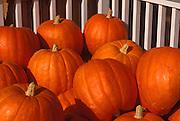 Image of pumpkins in Stowe, Vermont, American Northeast