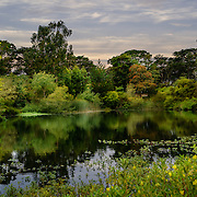 North Lake, Golden Gate Park. Photo by Alabastro Photography.