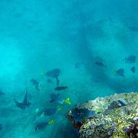 Galapagos Islands, Bartholomew Island snorkelling.  Ecuador, South America.