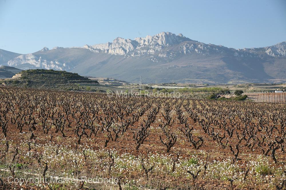 Rioja  Vineyards,  near Fuenmayor,  Spain.