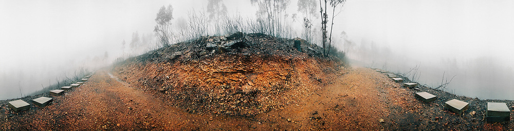 The remains of bee hives after some of the most devastating fires in portuguese history, Portugal.