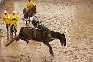 Bareback rider Spencer Brown, Miles City Bucking Horse Sale, Montana, judges, MODEL RELEASED on rider only