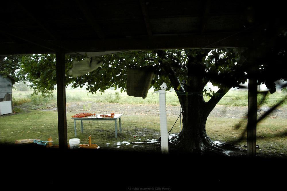 Les Petersheim, install&eacute;s comt&eacute; de Clark depuis quatre g&eacute;n&eacute;rations, ont onze enfants de 5 &agrave; 23 ans. Pendant l'&eacute;t&eacute;, alors qu'il n'y a pas &eacute;cole, tous prennent part aux activit&eacute;s quotidiennes de la ferme et des r&eacute;coltes. Sur leur exploitation de 162 hectares, la taille moyenne d'une ferme Amish, ils cultivent de l'avoine, du bl&eacute;, du ma&iuml;s, du soja, du sorgo et du millet en suivant des techniques &eacute;cologiques traditionnelles. Ils ont &eacute;galement 40 chevaux, 25 vaches et un petit &eacute;levage de poules et cochons.<br /> <br /> The Petersheim, established in Clark county since four generations, have eleven children from 5 to 23 years old. During the summer, whereas the school is closed, all take part in the daily activities of the farm and with harvests. On their exploitation of 162 hectares, average size of an Amish farm, they cultivate oat, wheat, corn, soy beens, sorgo and millet following ecological techniques. They also have 40 horses, 25 cows and a small breeding of hen and pigs.