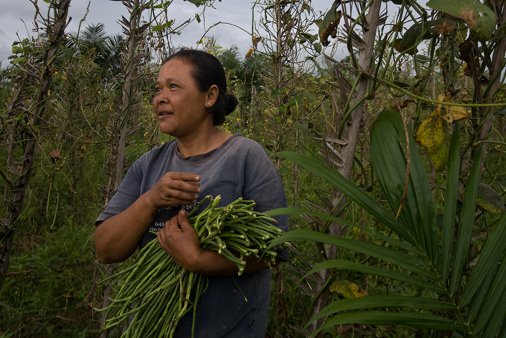 Cotmee Village near Meulaboh - Aceh, Indonesia  Nov. 2008. (Heifer Participant) Sarmi gathers the last crop of string beans from her land.