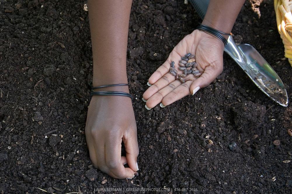 Photo of an African American gardener, planting bean seeds.