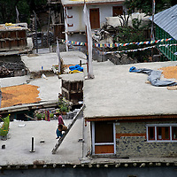 In Himachal Pradesh, as in much of the Himalaya and Karakoram mountains, people dry apricots on their rooftop. This is a scene in the village of Giabong in the Ropa Valley, India