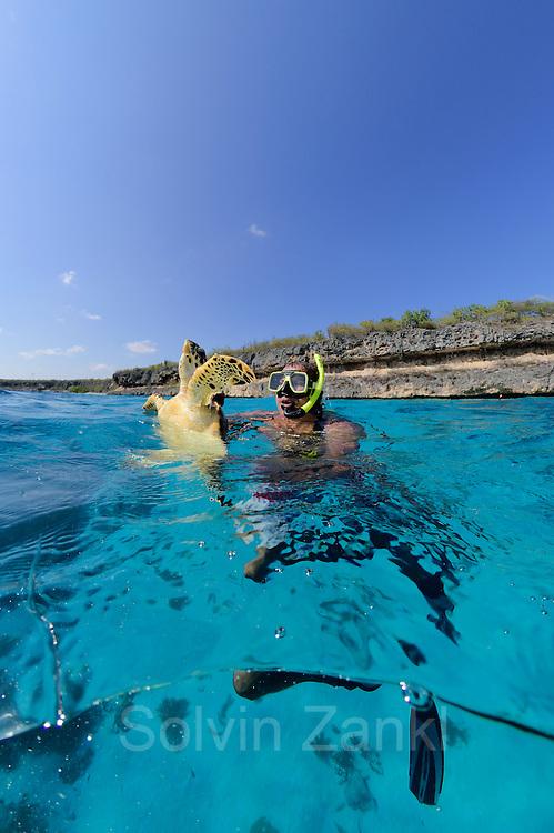 Schnorchelnd suchen die Forscher nach Meeresschildkröten im Riff. Von hinten pirscht sich der Fänger frei tauchend an das Tier heran, um es dann überraschend zu greifen und an die Oberfläche zu bringen. An Bord eines kleinen Bootes werden die Tiere vermessen, gewogen und markiert. So können sie bei einem Wiederfang individuell erkannt und ihre Entwicklung beobachtet werden. Gielmon 'Funchi' Egbreghts (Field specialist von STCB, ehemaliger Schildkrötenjäger);