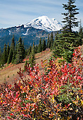 Mount Rainier: Naches Peak loop