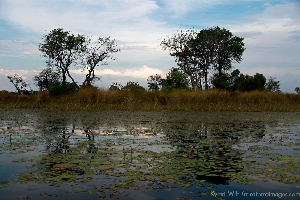 Africa, Botswana, Okavango Delta. Waterways and reflections of the Okavango Delta.
