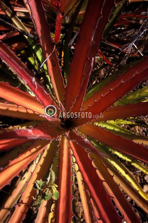 Canudos; Bahia; Brasil. 12/1997..Foto © Marcos Issa/Argosfoto.www.argosfoto.com.br