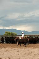 Cutting horses, cowboys, Quarter Horse, Whitehall, Montana