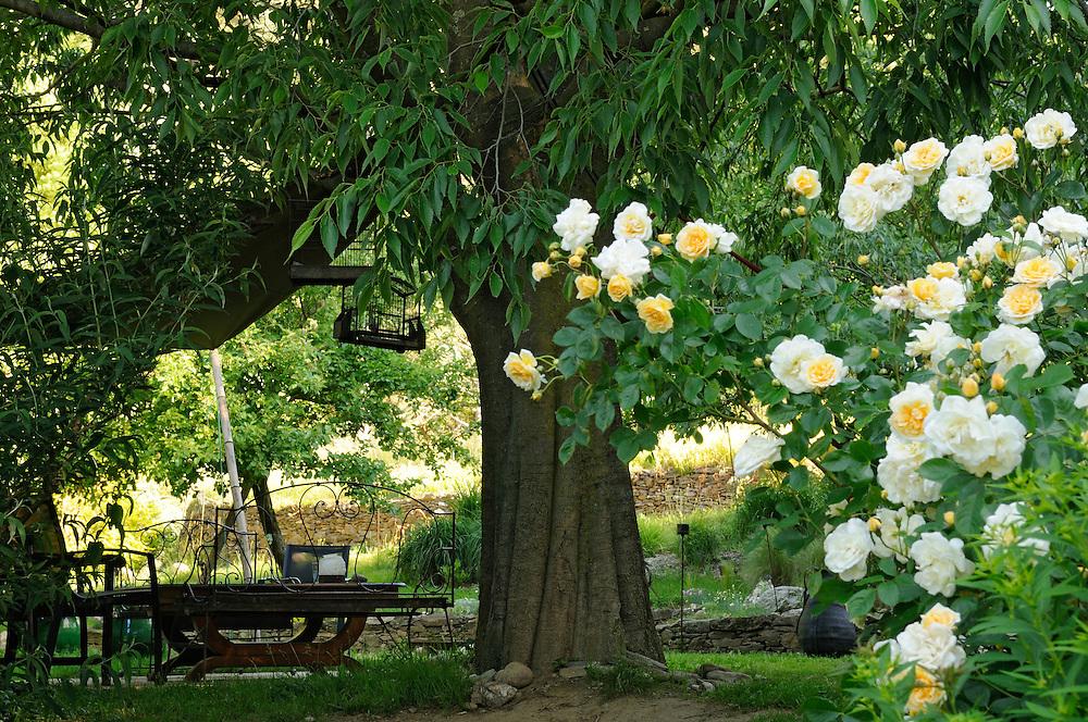 Jardin05 tomple 13 languedoc photos jean for Rosier jardin de france