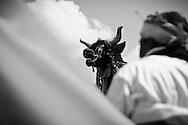 Funeral ceremony for Tjokorda Putra Dharma Yudha at Ubud, Bali, Indonesia, 28/7/2012.