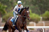 Mr. Commons gallops over the training track at Del Mar Race Course, Del Mar Ca. JAugust 20, 2011 Credit Alex Evers/EquiSport Photos