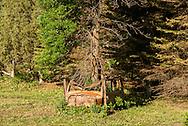 Tree, automobile, Northwest North Dakota