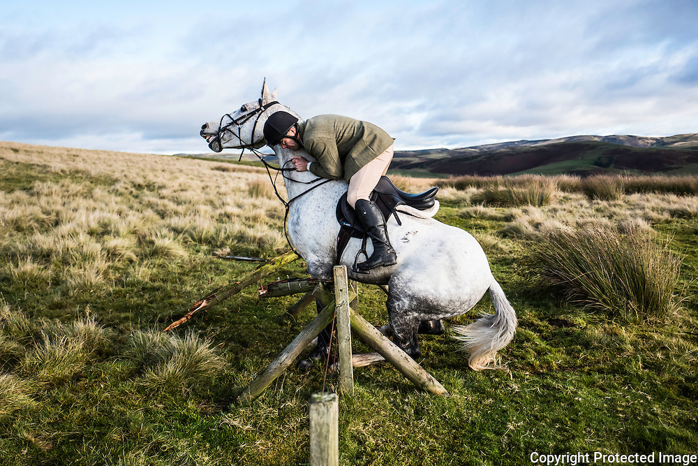 Jedburgh, Scottish Borders, UK. 12th November 2016. You can ask a horse to jump, but it might just say no! A rider comes a cropper at a hunt jump in the Border hills while hunting with the Jedforest Foxhounds.