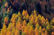 I think that clustered trees on a mountain flank make for an ideal subject to be rendered with the Orton technique. Taken in some nice, soft light at sunset in October in Valle Stretta, a beautiful small valley of the Western Alps in Piedmont, Italy..