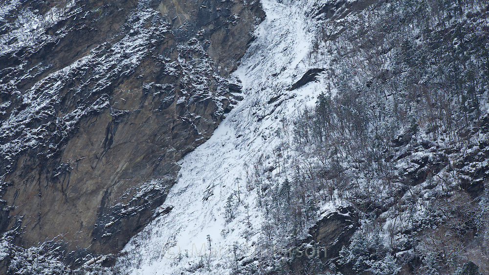 Pine trees on the side of a craggy mountain covered with snow, Langtang valley, Nepal