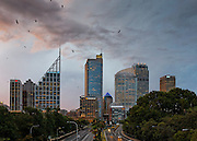 The skyline of downtown CBD Sydney includes the architectural prominent buildings: Deutsche Bank Place. Architect: Norman Foster of Foster and Partners (triangular form).  Chifley Tower Architect: Kohn Pedersen Fox  (centre) and Aurora Place Architect: Renzo Piano (curved form)