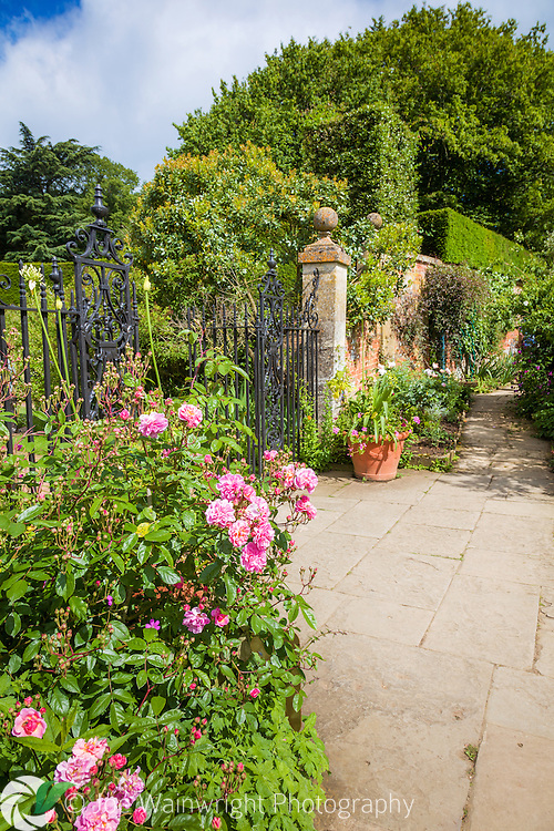 Roses and agapanthus flower beside the gate to the Old Garden at Hidcote Manor Garden, Gloucestershire.