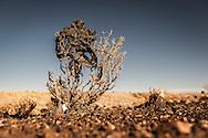 Plastic tree #11