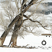 """SHOT 2/12/12 1:48:55 PM - A tire swing hangs from a tree near Crested Butte, Co. Crested Butte is a Home Rule Municipality in Gunnison County, Colorado, United States. A former coal mining town now called """"the last great Colorado ski town"""", Crested Butte is a destination for skiing, mountain biking, and a variety of other outdoor activities. The population was 1,529 at the 2000 census. The Colorado General Assembly has designated Crested Butte the wildflower capital of Colorado. The primary winter activity in Crested Butte is skiing or snowboarding at nearby Crested Butte Mountain Resort in Mount Crested Butte, Colorado. Backcountry skiing in the surrounding mountains is some of the best in Colorado. The mountain, Crested Butte, rises to 12,162 feet (3,700 m) above sea level..(Photo by Marc Piscotty / © 2012)"""