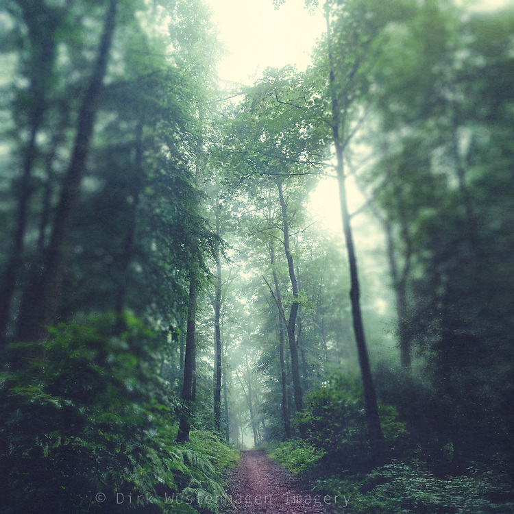 Hike through a lush forest on a misty summer morning<br />
