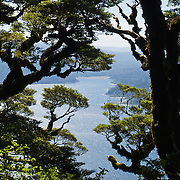 "Trees frame Lake Waikaremoana along the Panekiri Bluff trail in Te Urewera National Park, North Island, New Zealand. Published in ""Light Travel: Photography on the Go"" by Tom Dempsey 2009, 2010."