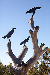 statue of crows on a tree branch in New Mexico
