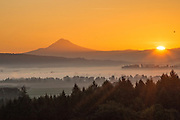 Sunrise over Mt. Hood & the Willamette Valley from Sokol Blosser vineyard, Dundee Hills, Willamette Valley, Oregon