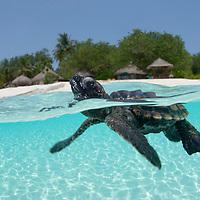 The Underwater Kingdom