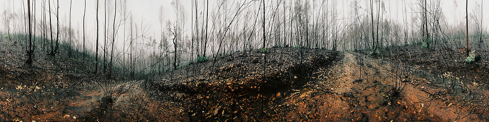 The remain of a forest on a misty day after some of the most devastating fires in portuguese history, Portugal.