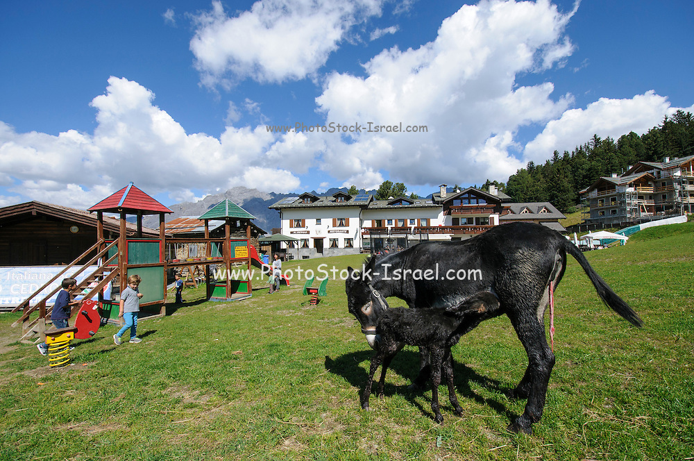 A donkey and foal in a playground