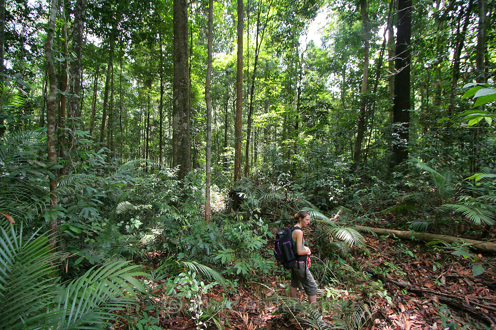 A woman hiking in rainforest in Taman Negara National Park, Malaysia..