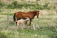Horse, goat, friends, pasture