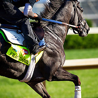 Frac Daddy gallops in preparation for the Kentucky Derby at Churchill Downs in Louisville, KY on May 01, 2013. (Alex Evers/ Eclipse Sportswire)
