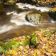 Autumn leaves gather around and beneath this hillside stream in Cumbria.