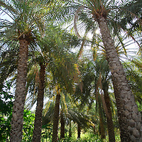 Artificial Oasis in the Hajar mountains. Oman<br />