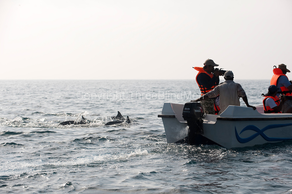 Dolphin watching off the West Coast at Kalpitiya.